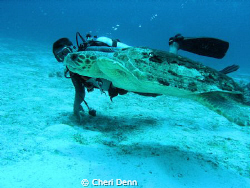 This turtle is huge.  The diver is swimming right next to... by Cheri Denn